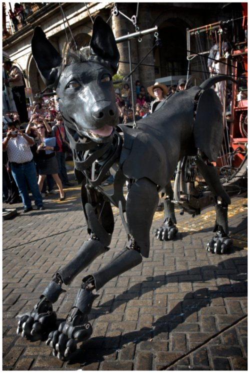 Xolo, Royal de Luxe